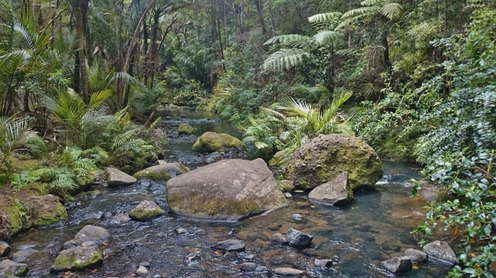 Creek in the Waitakere Ranges.